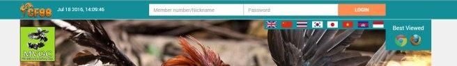 Cara Login Sabung Ayam Online CF88