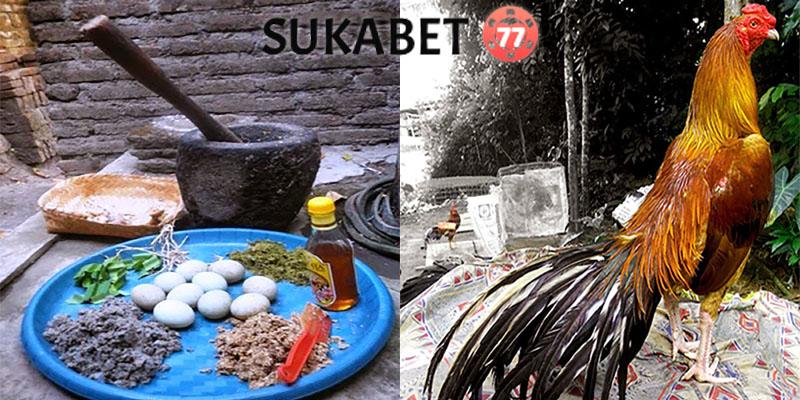 Tips Meracik Jamu Ayam Bangkok Agar Kuat dan Tahan Lama