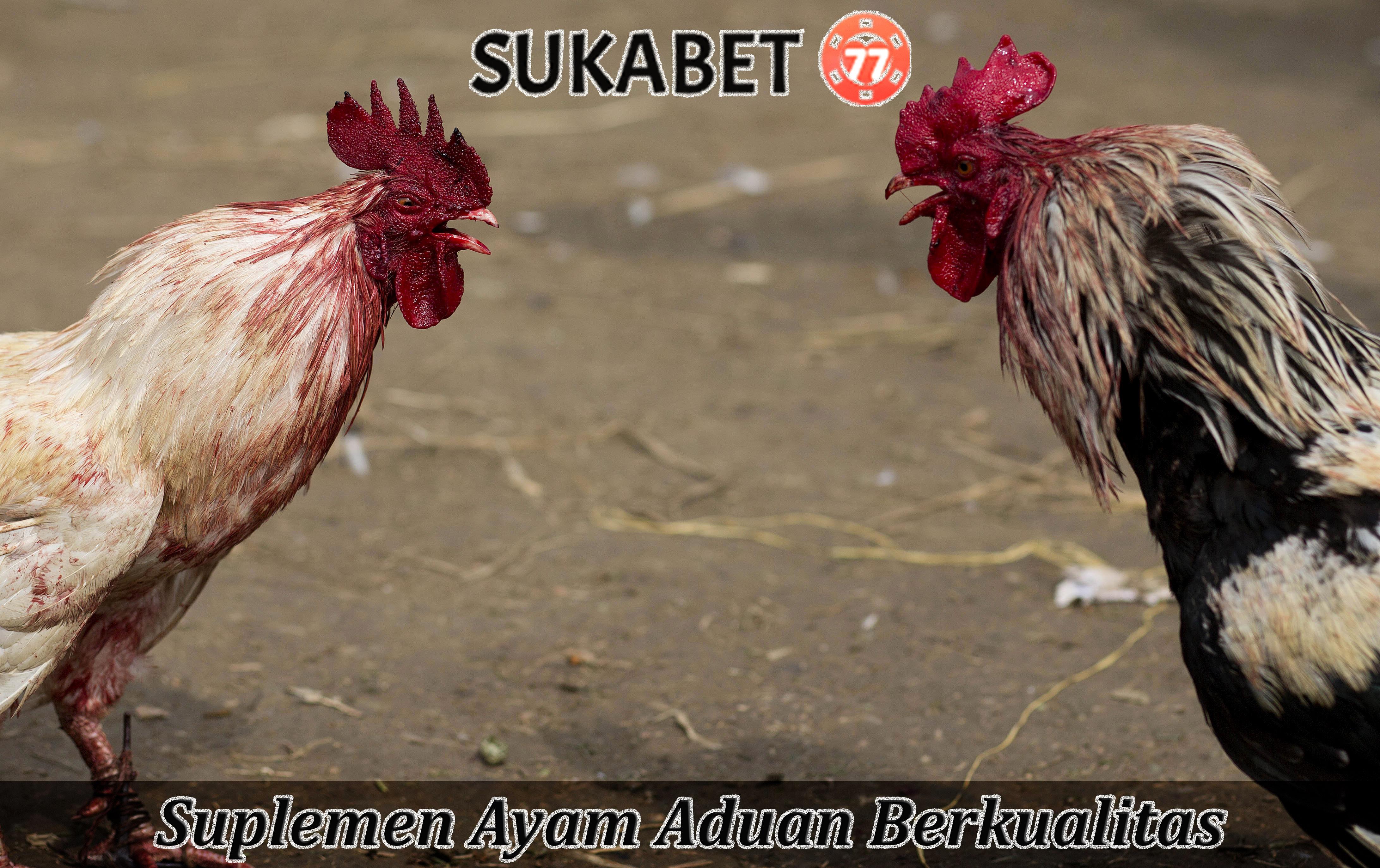 Suplemen Ayam Aduan Berkualitas
