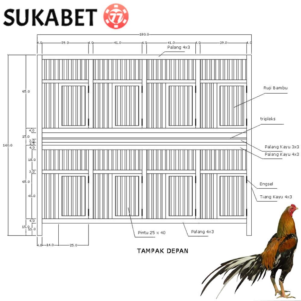 Jenis Kandang Ayam Bangkok dan Cara Pembuatannya