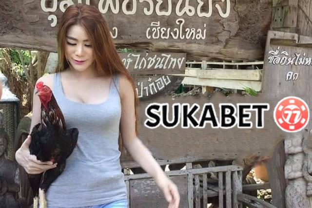 Tips Ampuh Melatih Nafas Ayam Bangkok Agar Tahan Lama