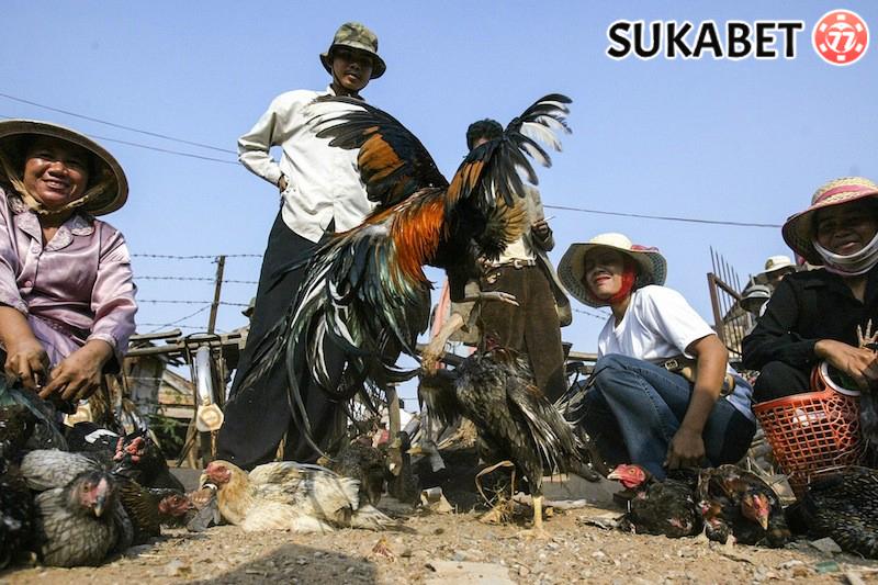 Agen Sabung Ayam – Istilah Umum Sabung Ayam