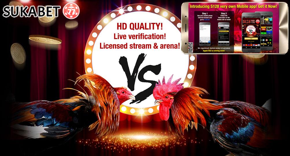 Kaya Dengan Bermain Sabung Ayam Online di Handphone