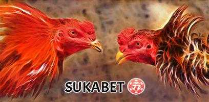 PROMO Bandar Sabung Ayam SUKABET77