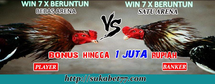 Promo Besar-Besaran Sabung Ayam Dari Sukabet77 Sebesar 1 Juta Rupiah