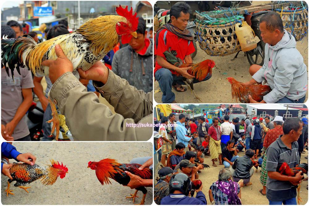 Mitologi Sabung Ayam Tanah Toraja