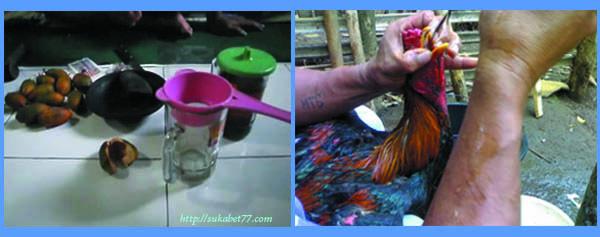 Resep Ampuh Untuk Mengobati Cacingan Pada Ayam.