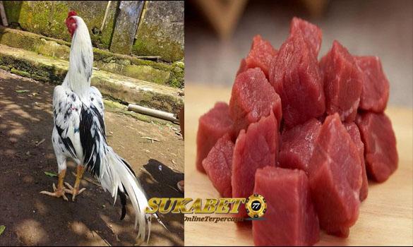 Manfaat Daging Kambing Untuk Ayam Bangkok
