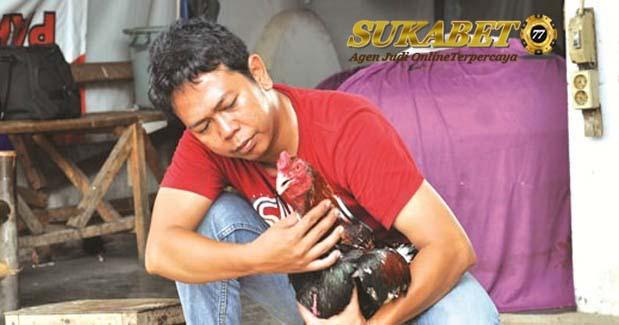 Cara menguatkan Leher Ayam Pertarung