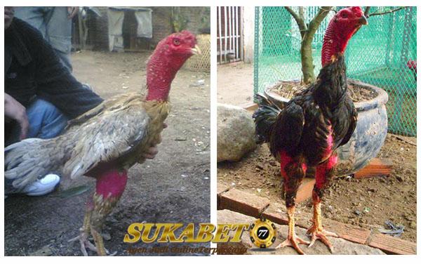 Keunikan Dan Kelebihan Ayam Saigon Yang Wajib Dicoba