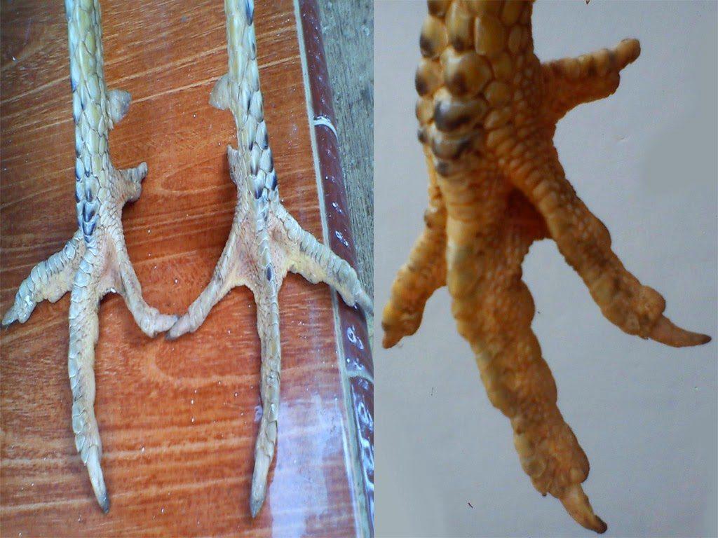 Cara Mengupas Sisik Kaki Ayam