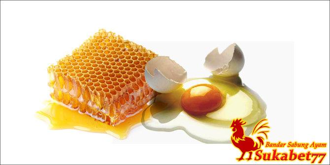 Manfaat Pemberian Madu Dan Telur Bagi Ayam Aduan