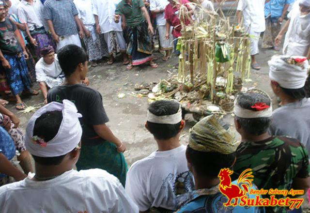 Menyambut Tradisi Tajen Bali Yang Terkenal