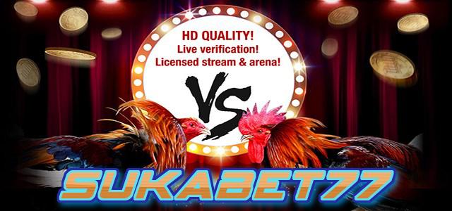 SUKABET77 - Agen Sabung Ayam Online