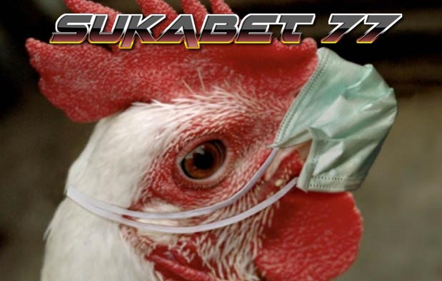 Pengobatan Tradisional Menyembuhkan Ayam Yang Ngorok