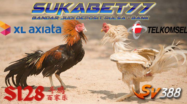 Kecurangan Yang Terjadi Dalam Arena Sabung Ayam